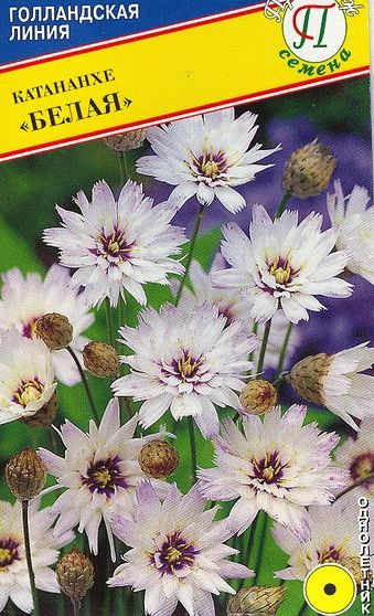 Катананхе белая семена