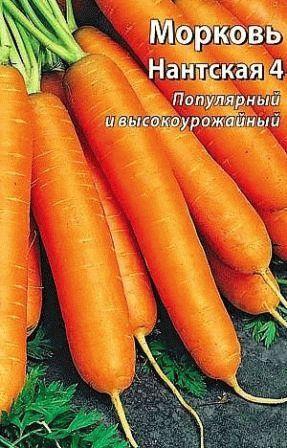 морковь Нантская 4 фото