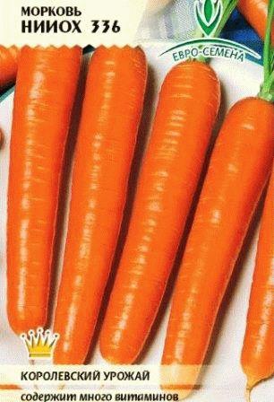 морковь НИИОХ 336 фото