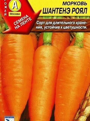 морковь Шантенэ фото