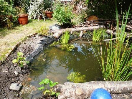пруд в саду к зиме