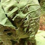 Народные средства для борьбы с вредителями капусты