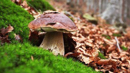 как посадить лесные грибы фото