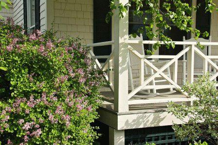 цветение сирени около дома фото
