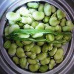 Сорта овощных бобов – фото и описание