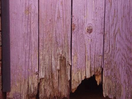 фиолетовый сад