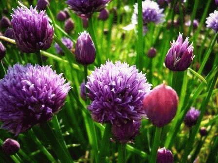 сине фиолетовые цветы
