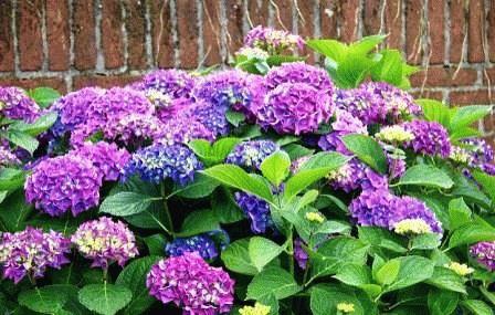 фиолетовые цветы в саду фото и названия