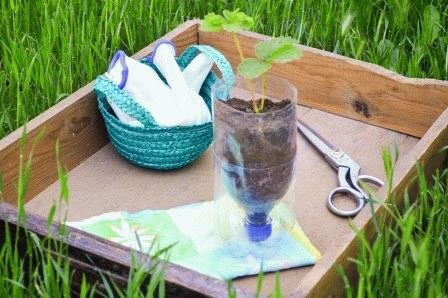 клубника в бутылке как посадить