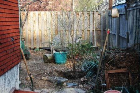 Как посадить калину осенью
