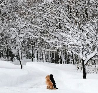 Абрикосы зимой как подготовить