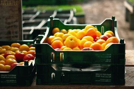 хороший урожай помидор в теплице