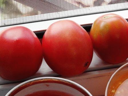 как сделать семена из помидор