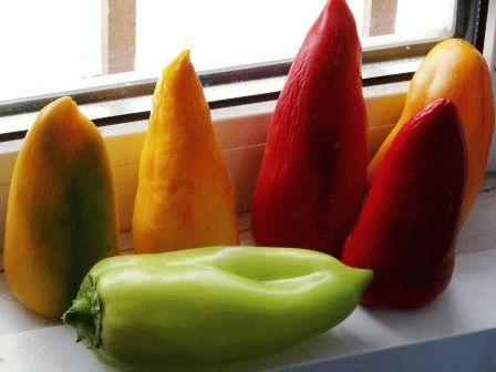 как собрать свои семена перца