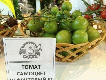 томат самоцвет нефритовый фото зеленый
