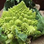Капуста Романеско: выращивание, рецепты приготовления