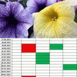 Петуния: лунный календарь выращивания на 2017 год