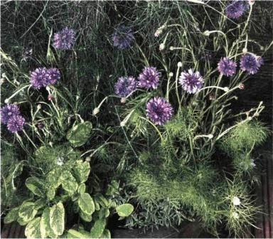 Композиция Травы и цветы