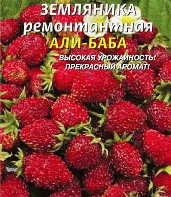 земляника ремонтантная АЛИ-БАБА фото