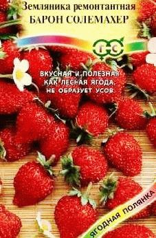 земляника ремонтантная БАРОН СОЛЕМАХЕР фото