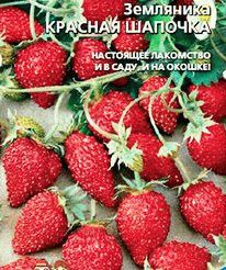 земляника ремонтантная КРАСНАЯ ШАПОЧКА фото