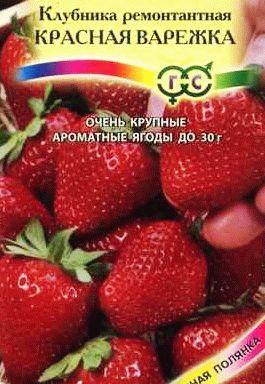 земляника ремонтантная КРАСНАЯ ВАРЕЖКА фото