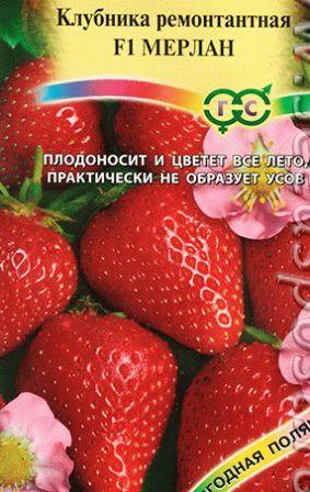 земляника ремонтантная МЕРЛАН фото
