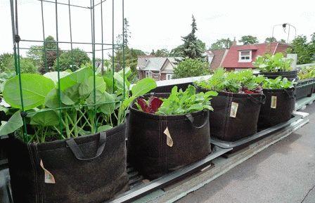 огород в бочках