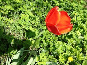 Луковичные цветы в саду с весны до осени
