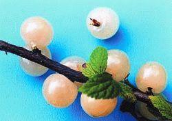 сорта войлочной вишни Белая фото