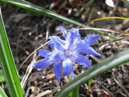 мелколуковичные цветы