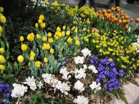 мелколуковичные цветы фото
