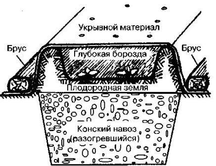 садило тыквенное на Руси