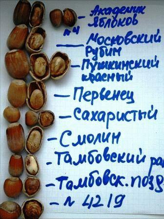 сбор разных сортов орехов