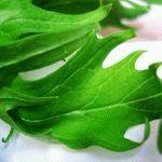 Капуста японская Мизуна - сорта и выращивание