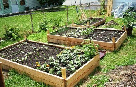 чем подкормить томаты в грунте