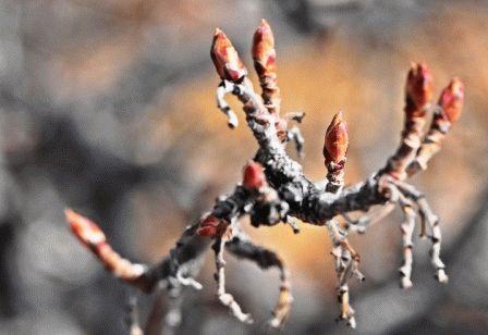 уход за смородиной весной борьба с вредителями