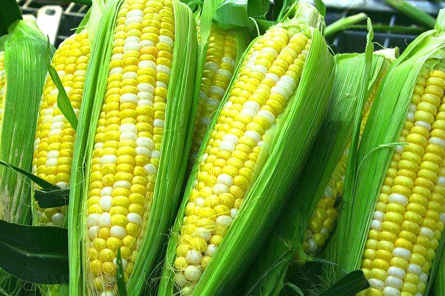 урожай кукурузы 2
