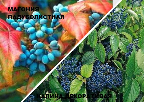 dekorativnie kustarniki osenu