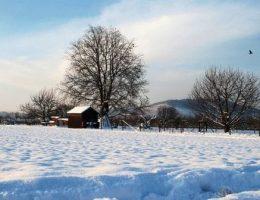 Календарь садовода на январь: что делать в саду