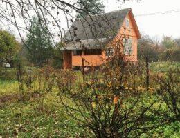 Календарь садовода на октябрь: что делать в саду