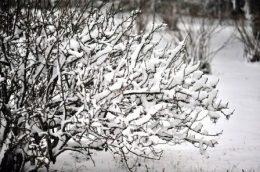 Календарь садовода на февраль: что делать в саду