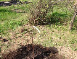 Календарь садовода на апрель: что делать в саду