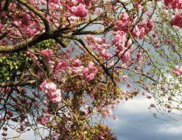 Календарь садовода на май: что делать в саду
