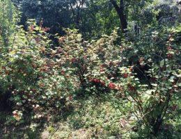 Календарь садовода на июнь: что делать в саду