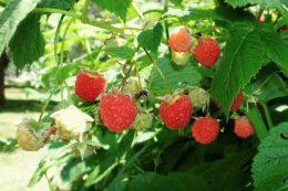 Календарь садовода на июль: что делать в саду