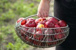 Календарь садовода на август: что делать в саду