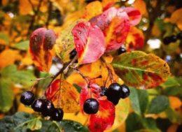 Календарь садовода на сентябрь: что делать в саду