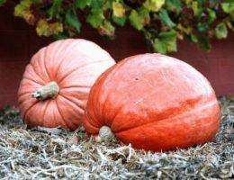 Календарь огородника на октябрь: дела на даче