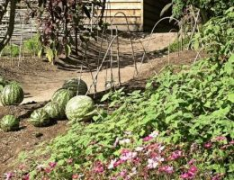 Календарь огородника на август: дела на даче